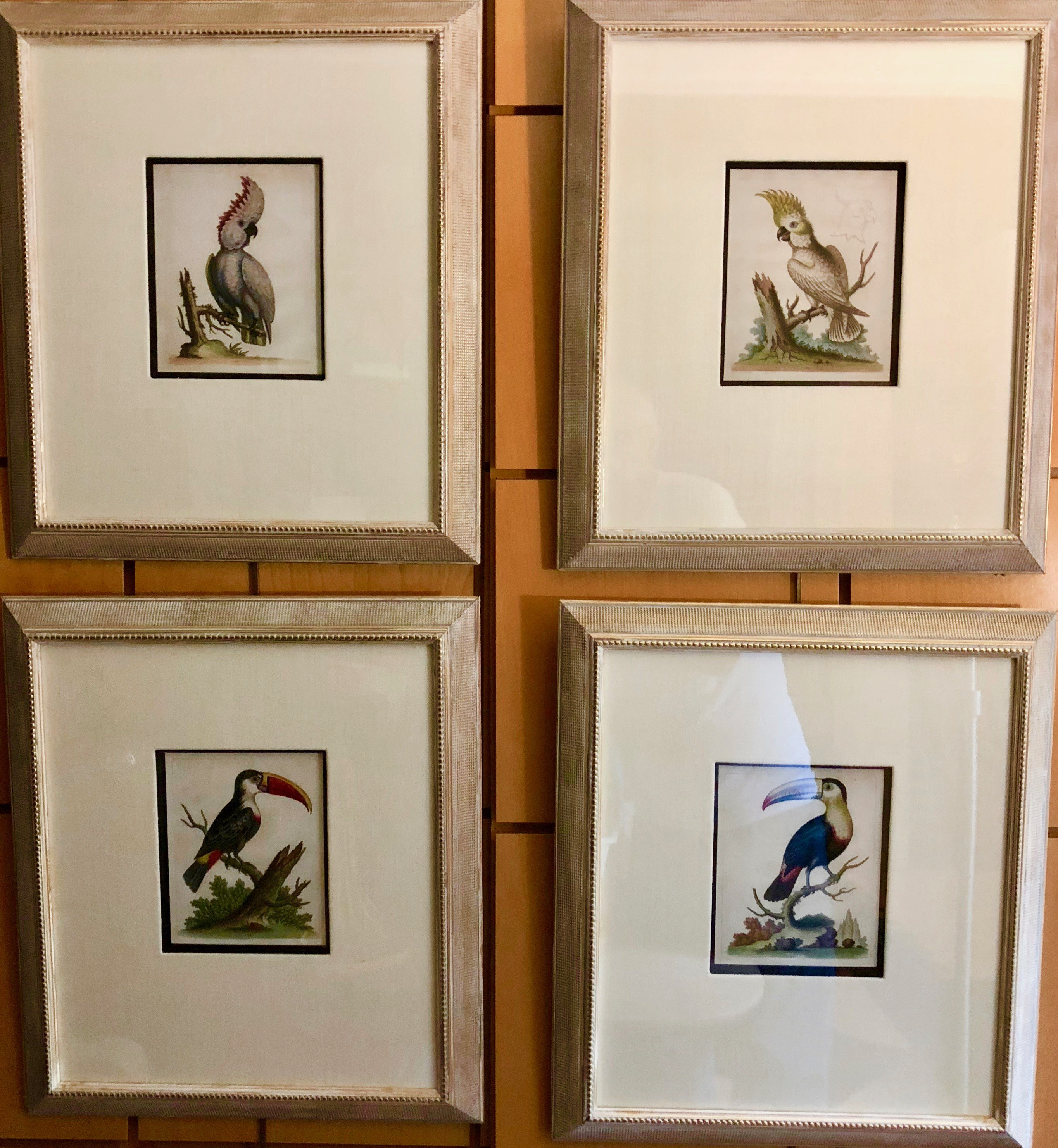 Set of Four Toucans and Cockatoos