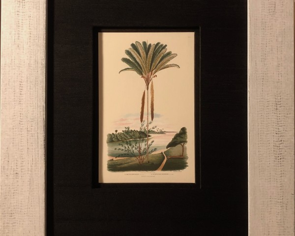 Art > Exotic Palm Tree Prints